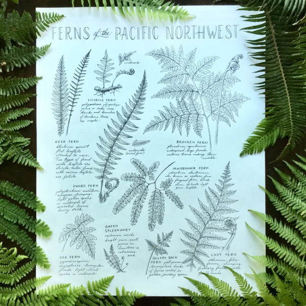 pacific northwest ferns